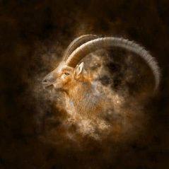 Capricorn zodiac sign image