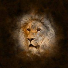 Leo zodiac sign image